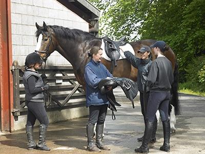 לימודי אנגלית ורכיבת סוסים בבאת